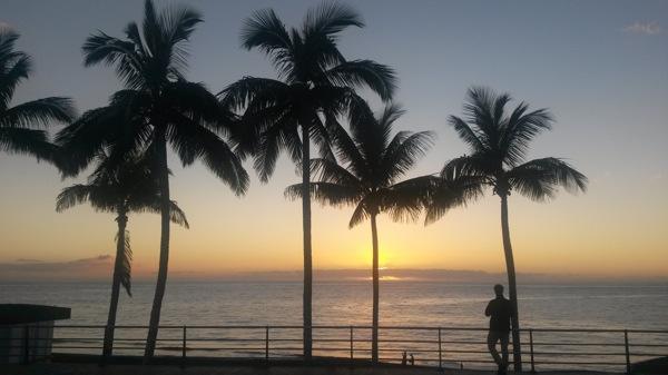 Palmen Puerto Naos