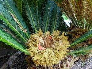Palmennest