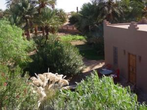 salle+jardin+de+méditation,+désert